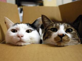 15-cats-in-box