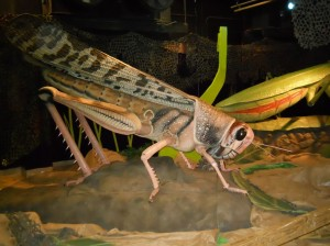 Bug Replica 2_AMWAT
