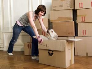 Dog Moving