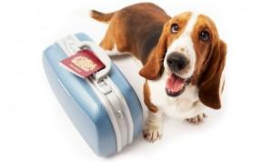 Traveling-dog