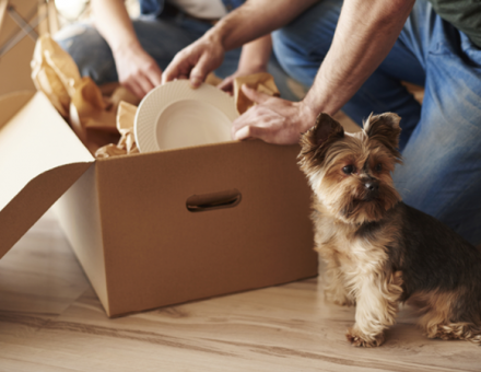 small dog standing in front of moving box